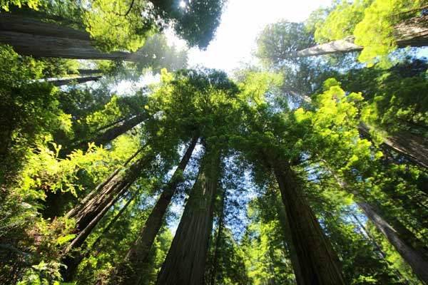 Bäume - Spender des Lebens